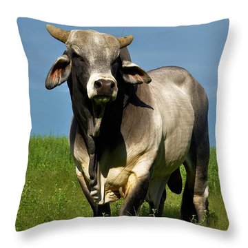 Throw Pillow featuring the photograph Brahman Boss by Jan Amiss Photography