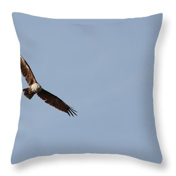 Brahminy Kite Throw Pillow