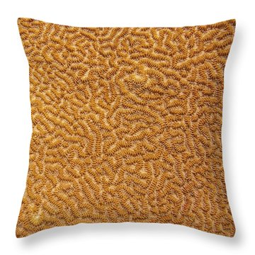 Brain Coral 47 Throw Pillow