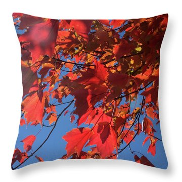 Branches Of Red Maple Leaves On Clear Sky Background Throw Pillow