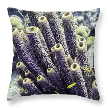 Throw Pillow featuring the photograph Branching Tube Sponge by Perla Copernik