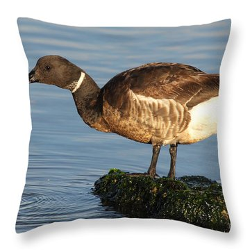 Throw Pillow featuring the photograph Brant Leaning Over Water by Max Allen