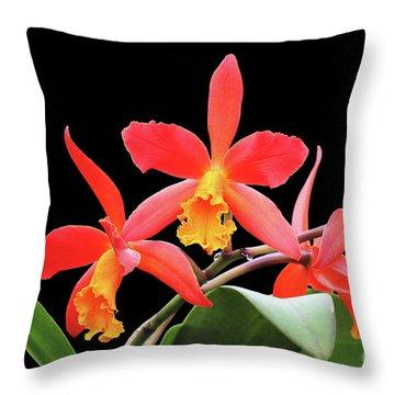 Brassolaeliocattleya Lily Marie Almas 'mrg' Orchid Throw Pillow
