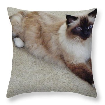 Brassy Our Birman Throw Pillow by VLee Watson