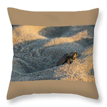 Brave Beginnings Sea Turtle Hatchling Delray Beach Florida Throw Pillow