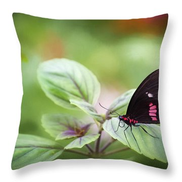 Brave Butterfly  Throw Pillow