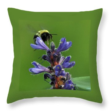 Throw Pillow featuring the photograph Bumble Bee Breakfast by Glenn Gordon