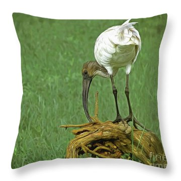 Breakfast With The Ibis Throw Pillow
