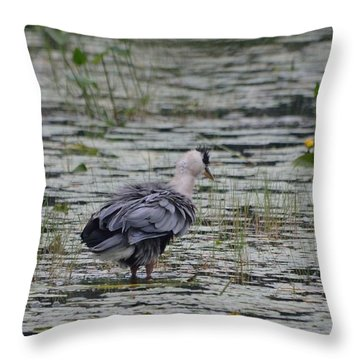 Breezy Blue- Great Blue Heron Throw Pillow by David Porteus