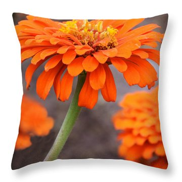 Bright And Beautiful Throw Pillow by Kathy M Krause