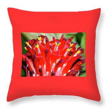 Throw Pillow featuring the photograph Bright Blooming Bromeliad By Kaye Menner by Kaye Menner