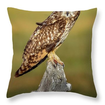 Bright-eyed Owl Throw Pillow