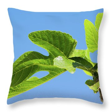 Bright Green Fig Leaf Against The Sky Throw Pillow by Cesar Padilla