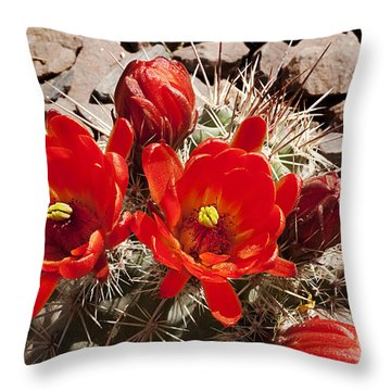 Throw Pillow featuring the photograph Bright Orange Cactus Blossoms by Phyllis Denton