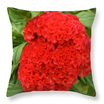 Bright Red Cockscomb Throw Pillow