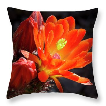 Bright Tangerine Cactus Flower Throw Pillow by Phyllis Denton