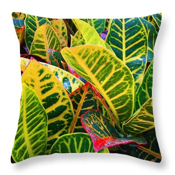 Brilliant Crotons Throw Pillow by Kay Gilley