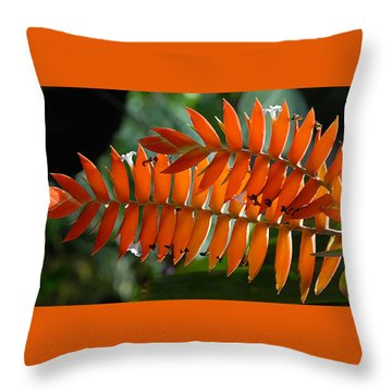Brilliant Orange Nature Throw Pillow by Steve Archbold