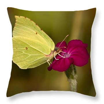 Throw Pillow featuring the photograph Brimstone 1 by Jouko Lehto