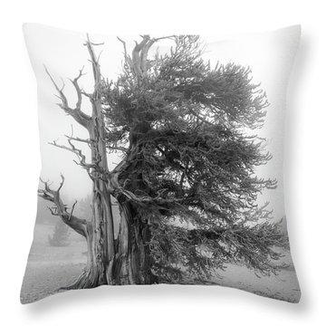 Bristlecone Mist Throw Pillow