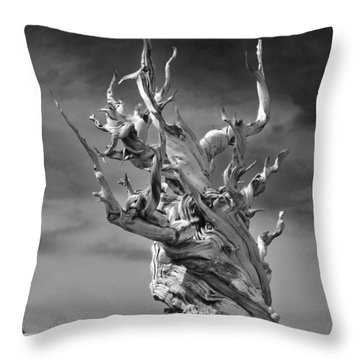 Bristlecone Pine - A Survival Expert Throw Pillow by Christine Till
