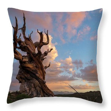 Bristlecone Pine Sunset Throw Pillow
