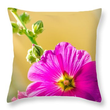 Bristly Hollyhock Alcea Setosa Throw Pillow