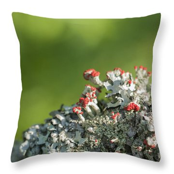 Brits On The Fence Throw Pillow