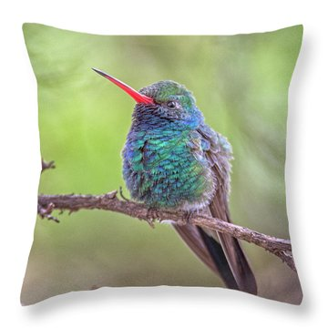 Broad-billed Hummingbird 3652 Throw Pillow