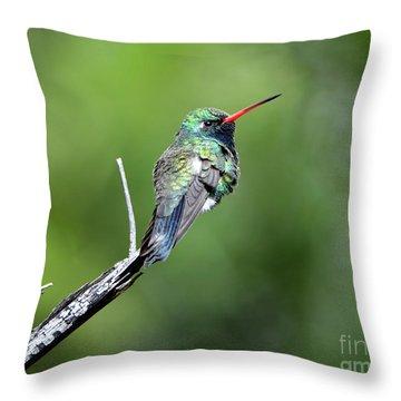 Broad-billed Hummingbird Throw Pillow