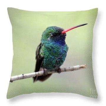 Broad-billed Hummingbird Portrait Throw Pillow