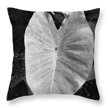 Broad Leaf Of A Taro Plant Throw Pillow