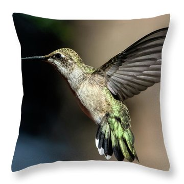 Broad-tailed Hummingbird Female Throw Pillow