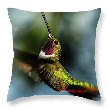 Broad-tailed Hummingbird In Flight Throw Pillow