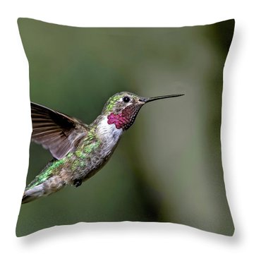 Broad-tailed Hummingbird Male Throw Pillow