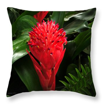 Bromeliad 9-18-15 Throw Pillow