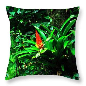Bromeliads El Yunque  Throw Pillow by Thomas R Fletcher