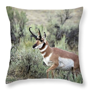 Bronghorn Buck Throw Pillow