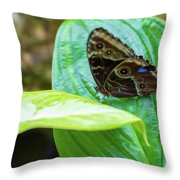 Brown And Blue Butterfly Throw Pillow