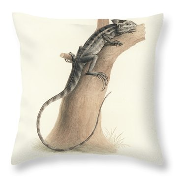 Throw Pillow featuring the drawing Brown Basilisk, Basiliscus Vittatus by Friedrich August Schmidt