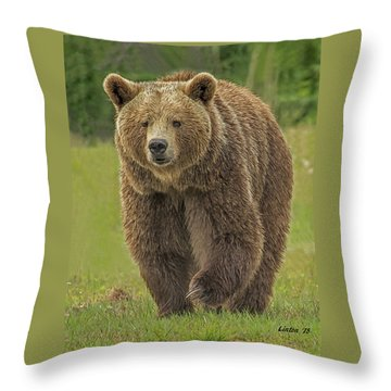 Brown Bear 1 Throw Pillow