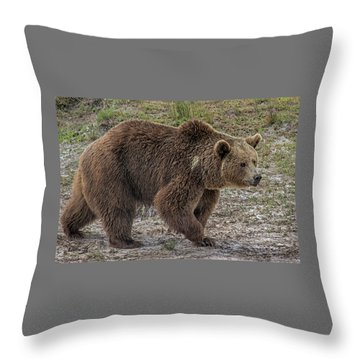 Brown Bear 6 Throw Pillow
