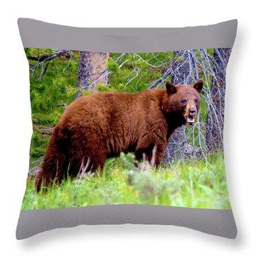 Brown Bear Throw Pillow