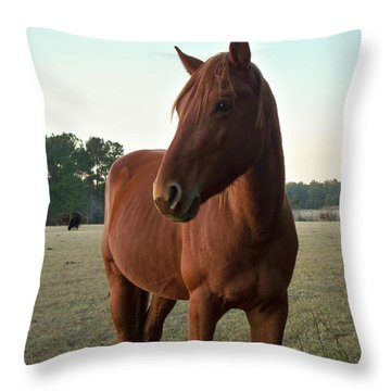 Throw Pillow featuring the photograph Brown Beauty by Betty Northcutt