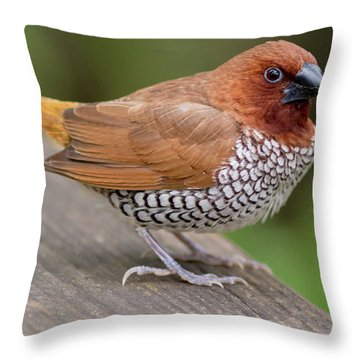 Brown Bird Throw Pillow