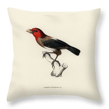 Throw Pillow featuring the drawing Brown-breasted Barbet, Pogonornis Melanopterus by Breck Bartholomew