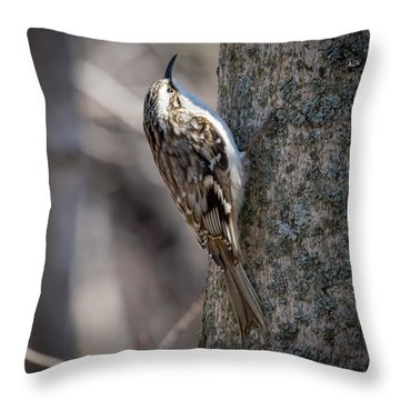 Throw Pillow featuring the photograph Brown Creeper  by Ricky L Jones