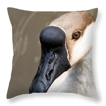Brown Eye Throw Pillow by Christopher Holmes