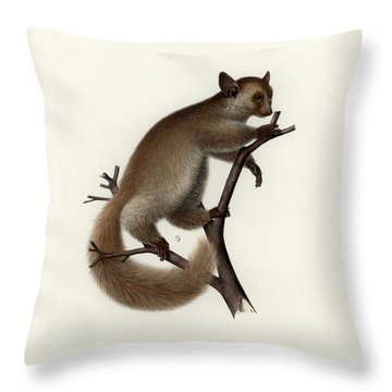 Brown Greater Galago Or Thick-tailed Bushbaby Throw Pillow