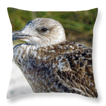 Brown Gull At Wiggins Pass Throw Pillow